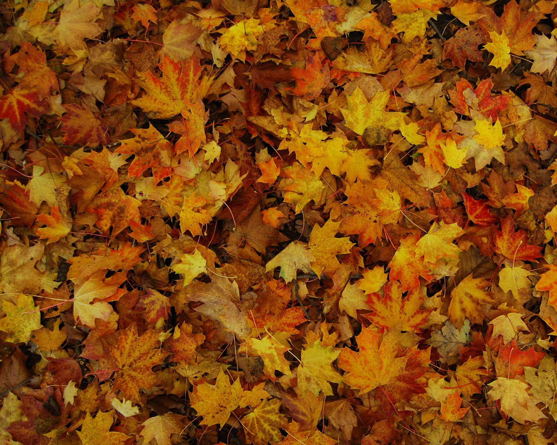 Leaf Removal Indianapolis Leaves